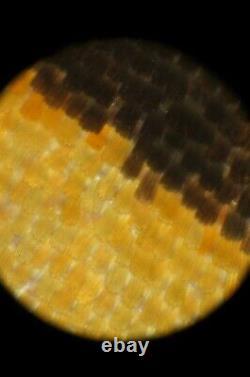 MITUTOYO QV-objective 5X /0 infinity Microscope Objective Lens Macro