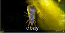 Microscope Objective Olympus LWD MSPlan 20x / 0.40