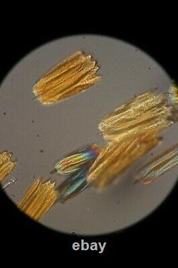 Nikon Plan Apo 20X 0.65 160/0.17 Microscope objective lens Apochromatic RMS